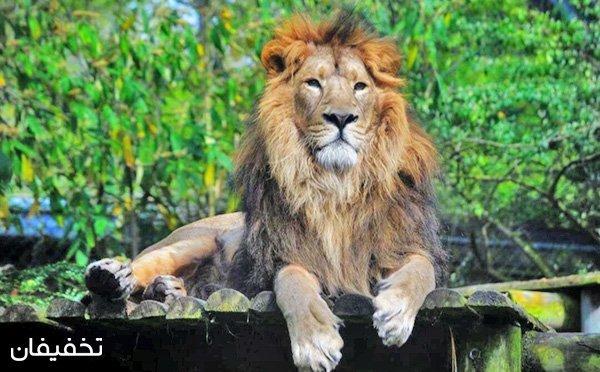 باغ وحش پارک ارم، بزرگترین باغ وحش ایران ویژه شنبه تا پنجشنبه با ۲۰% تخفیف